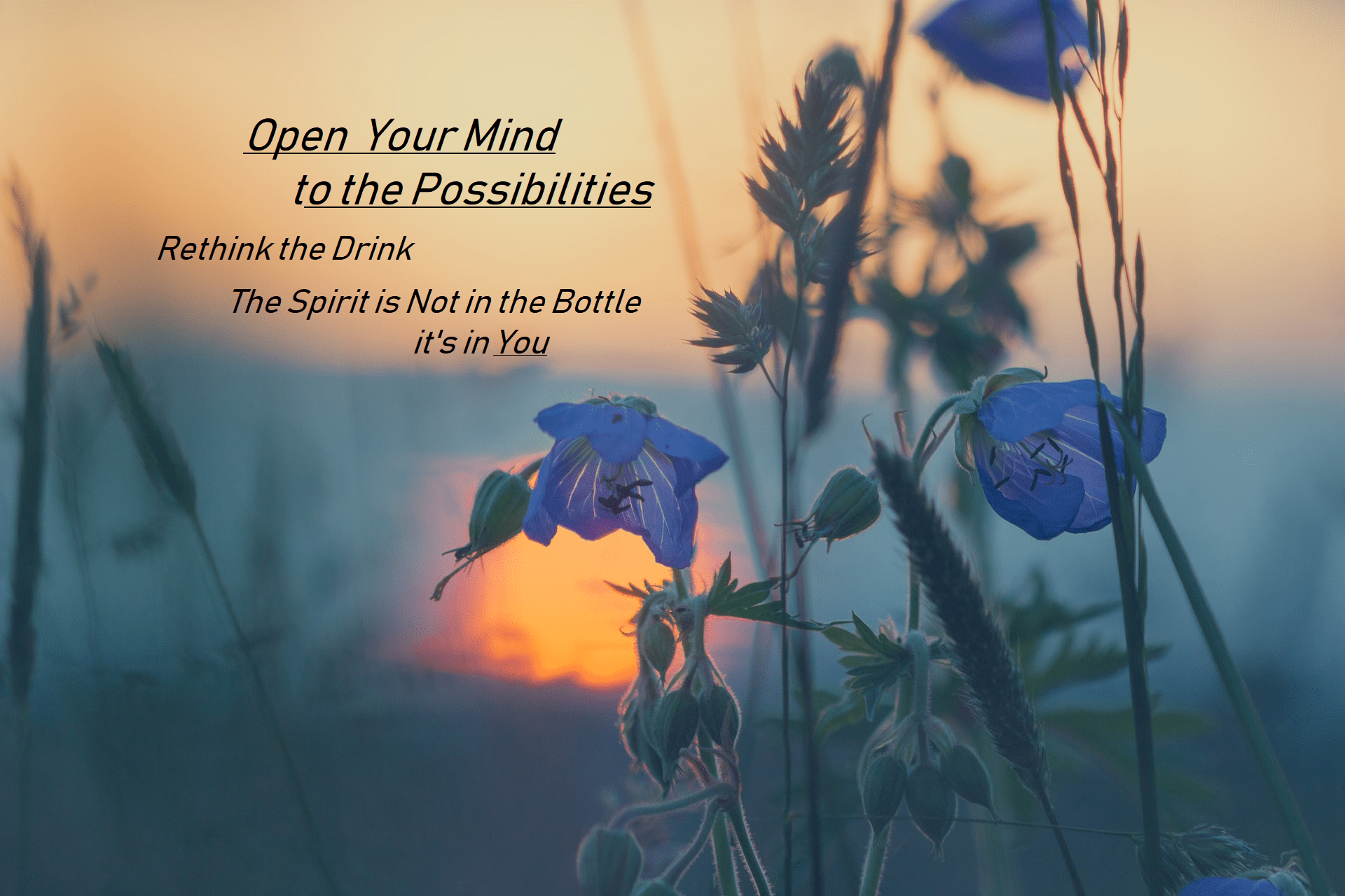 flowers with sunset and quote