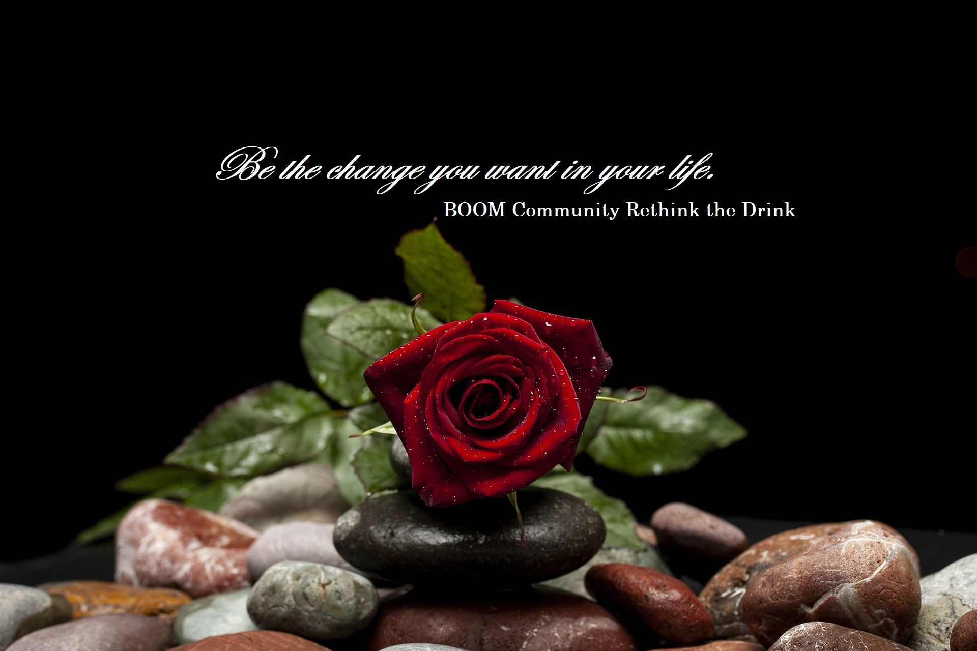 Red rose, invitation to join BOOM Community for alcohol free relationships