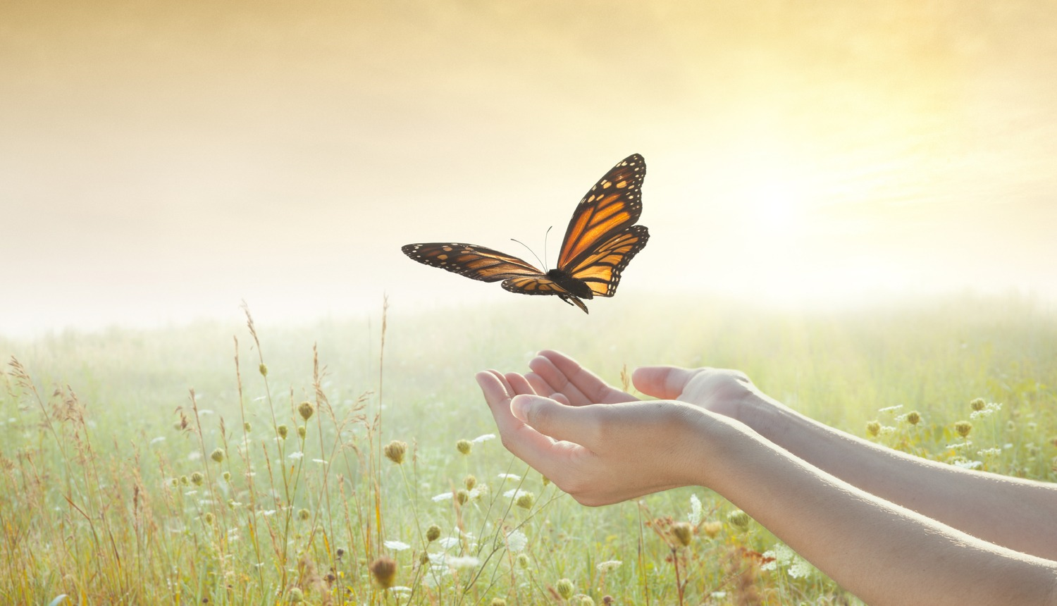 Womans hands with butterfly