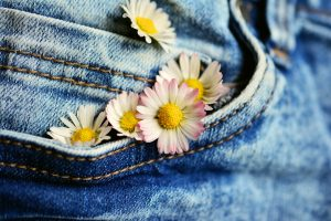 Daisies in denim pocket