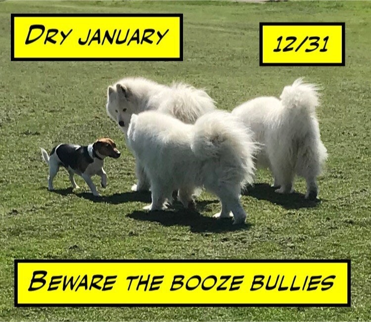 Dry January Beware the Booze Bullies day 12 of 31