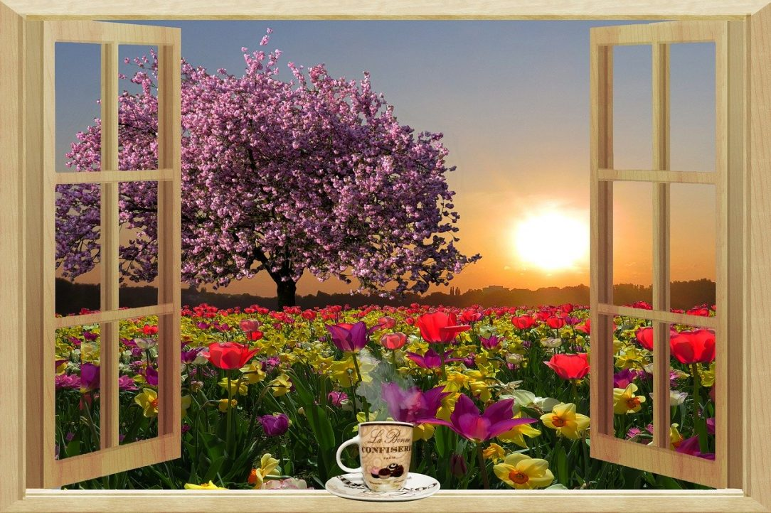 Window open to flowers and sun going sober alcohol free june