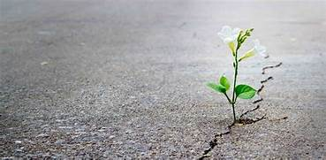 Flower through concrete- the perfect time to go sober