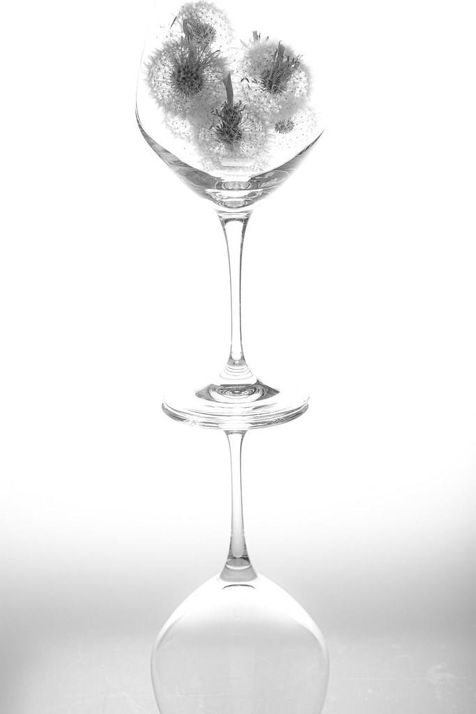 Wine Glass with Dandelion Fluff Have you Had Enough Drinking Alcohol