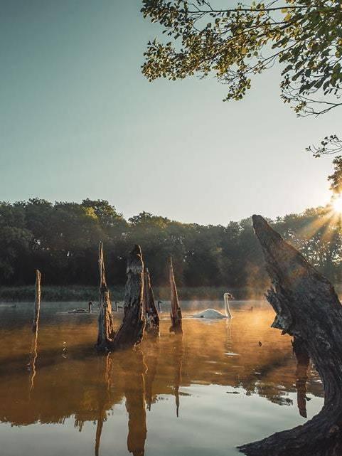 Swan in lake with sun beams representing Sober Serenity and Spirituality