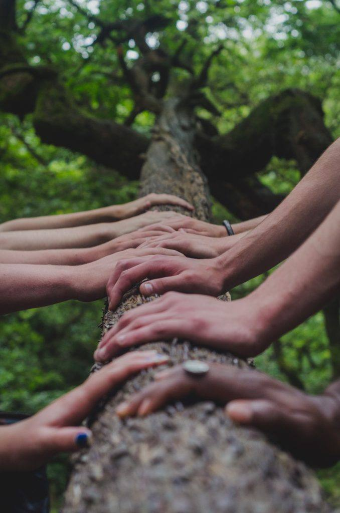Hands on Tree - Demystifying Sober - Survival Guide From My  First 10 Days Alcohol-Free