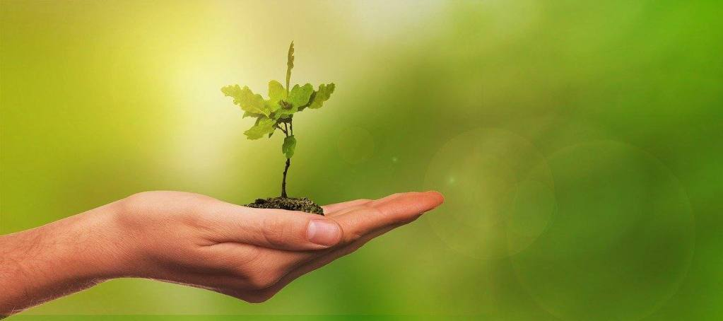 Seedling learn to grow in sobriety