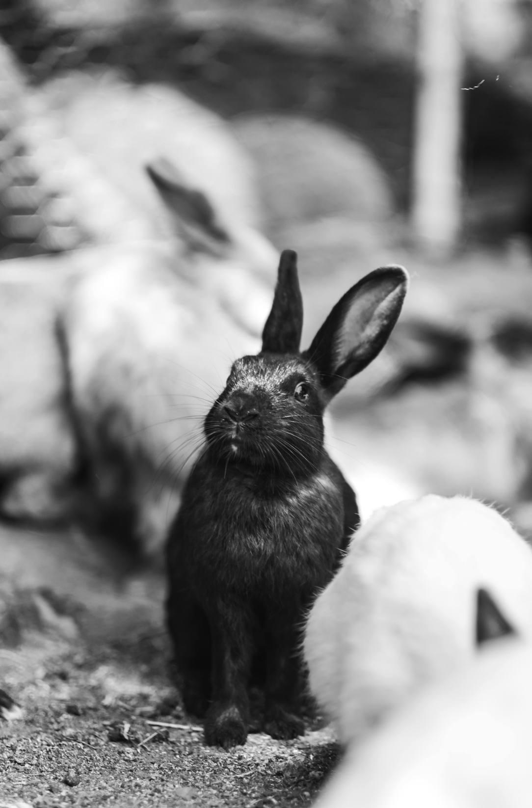 Black Bunny -- FOMO in Dry July
